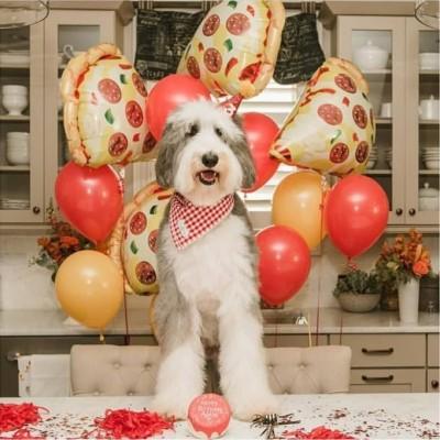 Шары фольга Пицца и букет из шаров